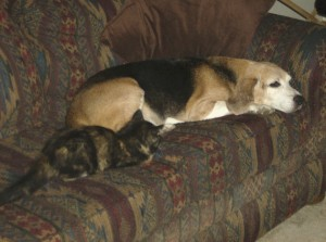 Suni with our Beagle, Optimus